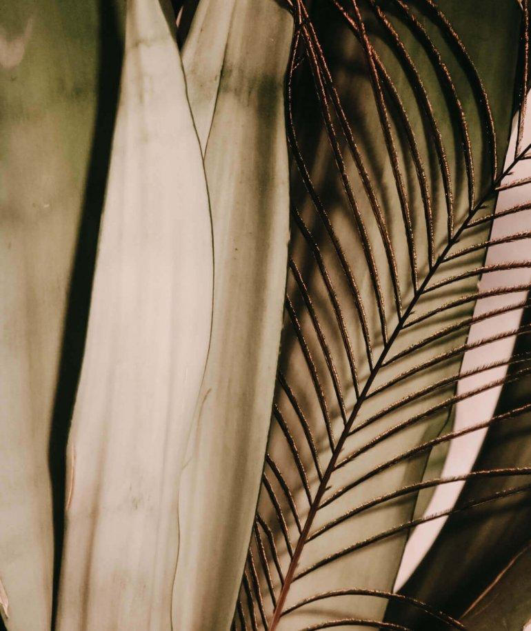 Pfauenfeder vor Pflanze
